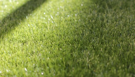 Natural versus synthetic lawn